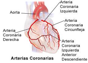 Arterias_coronarias.jpg